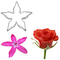 Complete Rose Flower Cutter Set 11pcs