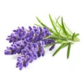 Roberts Lavender Natural Flavouring 30ml