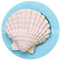 Sugar Shapes Seashell Medium Silicone Mould