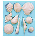 Sugar Shapes Shells Silicone Mould